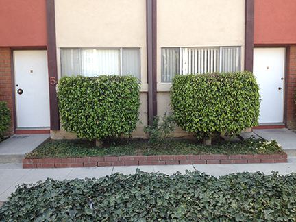 4_Apartment_bushes