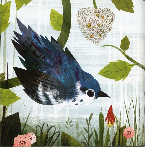 acornbird